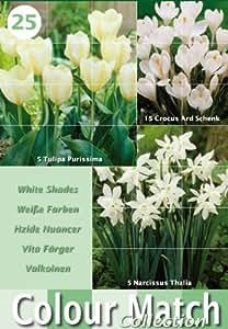 Greenbrokers Ltd Colour Harmony Blumenzwiebeln, Mix mit 25 Frühlingsblumen, Weiß