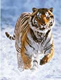 Tiger in Winter Jigsaw Puzzle 500pc by Ravensburger