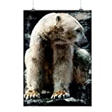 Polaire Ours Sauvage Animal blanc Velu Matte/Glacé Affiche A2 (60cm x 42cm) | Wellcoda
