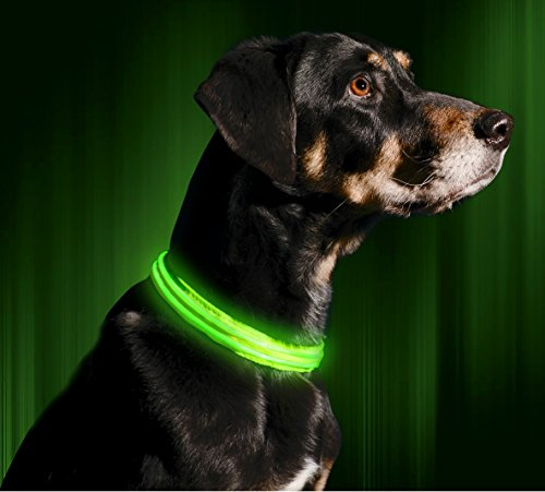 Illumiseen LED Dog Collar - USB Rechargeable - Your Dog Will Be More Visible & Safe - 6 Colours (Red, Blue, Green, Pink, Orange & Yellow) and 4 Sizes - Perfect To Use With Our Matching Lead 2
