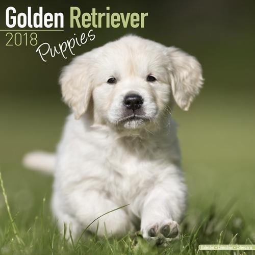 Golden Retriever Puppies Calendar 2018 (Mini Square) por Avonside Publishing Ltd