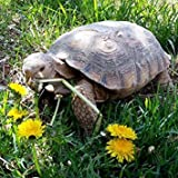 GEOPONICS Seeds: World - Mélange Tortoise Alimentaires Graines