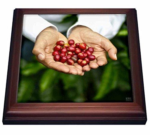 3dRose Hochformat Francisco serracin, Gründer von Don Pachi Kombi, Halten Ganze Jane, Kaffee...