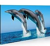 islandburner Bild Bilder auf Leinwand Delphine Delfin 1p XXL Poster Leinwandbild Wandbild Dekoartikel Wohnzimmer Marke