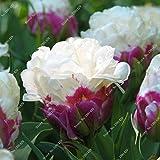 5 Vrai Tulip Ampoules, (pas Tulip Seeds), Bulbes à fleurs Tulipes, Rhizome...