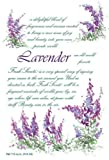 Willowbrook Original Scented Sachets, (LAVENDER) by Freshscents