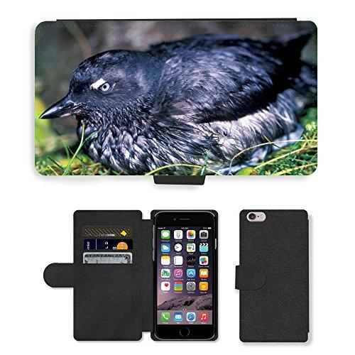 Just Mobile pour Hot Style Téléphone portable étui portefeuille en cuir PU avec fente pour carte//m00140178cassins cassin à oiseau/oiseaux/Apple iPhone 6Plus 14cm