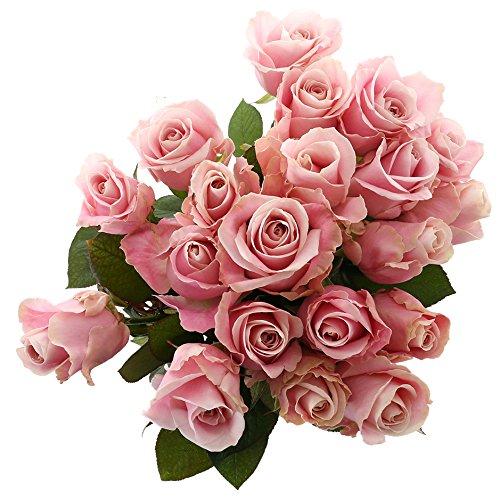 Choice of Green - 1 bouquet d?avalanche rose grand rose - 20 tiges - Hauteur ? 60 cm - Qualité