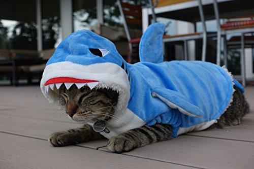 Hai Kostüm für Katzen