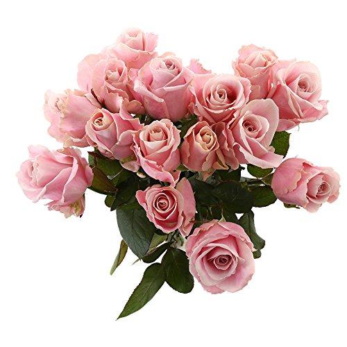 Choice of Green - 1 bouquet d'avalanche rose moyen - 15 tiges - Hauteur ↕ 60 cm - Qualité hollandaise - Frais du cultivateur