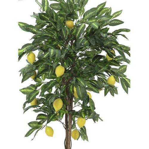 Euro Palms 82507816 Zitronenbaum 180 cm