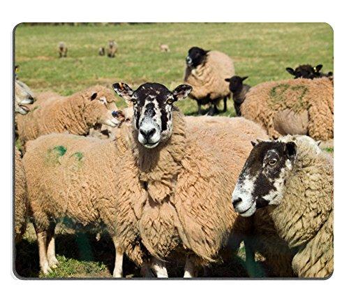 Herde Gras (Liili Mauspad Naturkautschuk Mousepad Bild-ID: 4556237eine Herde gemischt Vielzahl Lämmer und Schafe in ein Lush Grün Gras)