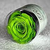 Rosa eterna, rosa estabilizada VERDE