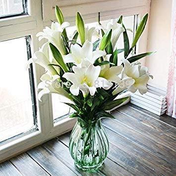 Fash Lady Hausgarten-anlage 5 Samen Echte Lilie Lilium longiflorum Schneiden Blumensamen