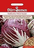 Salatsamen - Radicchio Palla Rossa von Dürr-Samen