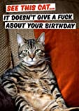 See This Cat. It Doesn't Give A Fuck About Your Birthday Rude Birthday Card