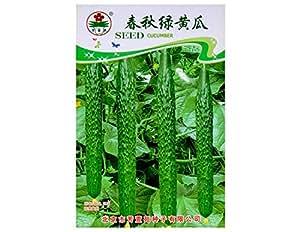 Semi di semi di ortaggi cetriolo 20pcs