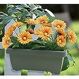 Buri Balkonkasten mit Künstlichen Gerbera Orange Blumenkasten Kunstpflanze Gartendeko