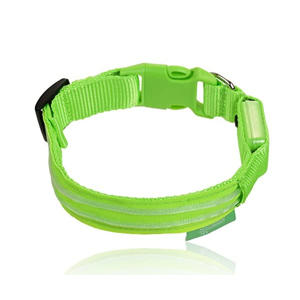 Illumiseen LED Dog Collar - USB Rechargeable - Your Dog Will Be More Visible & Safe - 6 Colours (Red, Blue, Green, Pink, Orange & Yellow) and 4 Sizes - Perfect To Use With Our Matching Lead 3