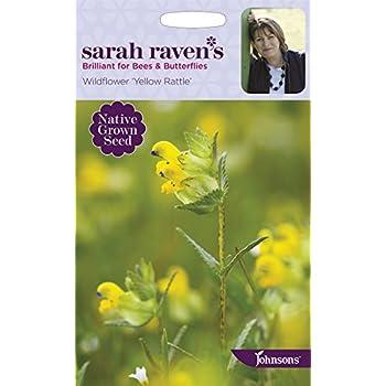 2016 HARVEST WILD FLOWER YELLOW RATTLE 20 GRAM ~ 6000 SEEDS RHINANTHUS MINOR