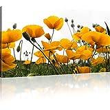 Mohnblumen auf der Wiese Bilder auf Leinwand Blumen Bilder Kunstdruck - 100x55 cm 1-Teilig: Gelb