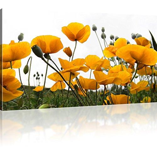 Mohnblumen auf der Wiese Bilder auf Leinwand Blumen Bilder Kunstdruck