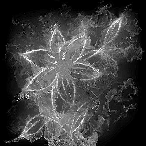 Bilderdepot24 Vlies Fototapete - Feuerlilie - schwarz Weiss - 50x50 cm - mit Kleister - Poster - Foto auf Tapete - Wandbild - Wandtapete - Vliestapete