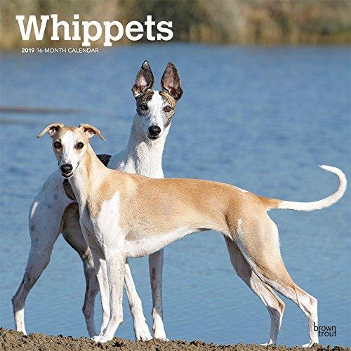 Whippets - Kleine Englische Windhunde 2019 - 18-Monatskalender mit freier DogDays-App: Original BrownTrout-Kalender [Mehrsprachig] [Kalender] por Inc. Browntrout Publishers
