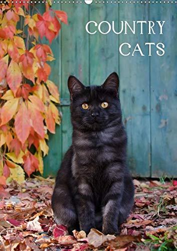 COUNTRY CATS (Wandkalender 2020 DIN A2 hoch): Bezaubernde Katzen fotografiert auf dem Land und in Bauerngärten. (Monatskalender, 14 Seiten ) (CALVENDO Tiere) -