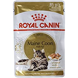 ROYAL CANIN Chat Maine Coon Adulte Nourriture, 85g