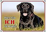 Hundeschild Labrador - Warnschild aus Metall - uv-beständig in TOP Qualität, DIN A5
