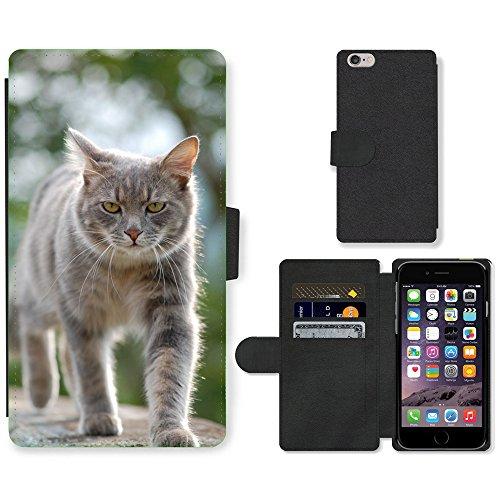 Just Mobile pour Hot Style Téléphone portable étui portefeuille en cuir PU avec fente pour carte//m00140329chat chaton chat Kitty Pet Animal//Apple iPhone 6Plus 14cm