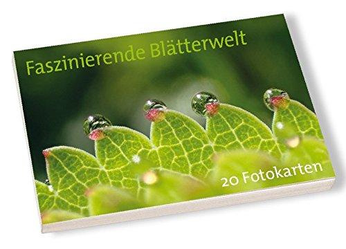 Postkartenbuch Faszinierende Blätterwelt