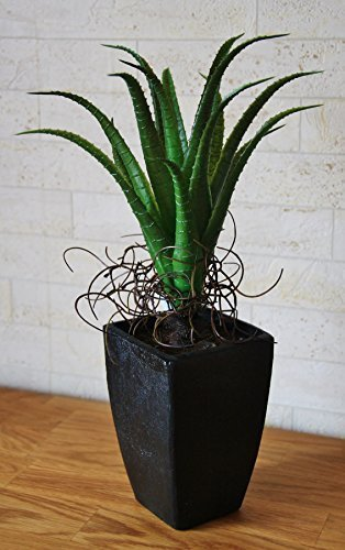 Agave grün, schmale Blätter, getopft, HxØ: 38x20cm, Kunststoff