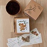 Geschenk-Anzuchtset Lebkuchenbaum - 2