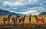 ClassicJP Puzzle 1000 Pezzi Famiglia di Cavalli Animali per Bambini di età Superiore Ai 14 Anni