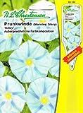 Prunkwinde Winde Ismay Pharbitis purpurea Kletterpflanze