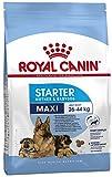 Royal Canin Hundefutter Maxi Starter 15 kg, 1er Pack (1 x 15 kg)