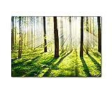 Handgefertigtes Leinwandbild 120x80cm mit Naturmotiv Sonnenstrahlen im Wald. Der Frühlings kommt...
