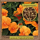 Samenliebe rankende Kapuzinerkresse-Samen  10 Samen hochwertige Blumen-Samen - aus natürlichem Anbau - Herkunftsland: Deutschland