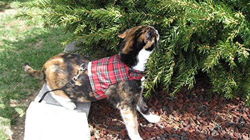 Mynwood Cat Jacket/Harness Royal Stewart Tartan Kitten up to 8month 3