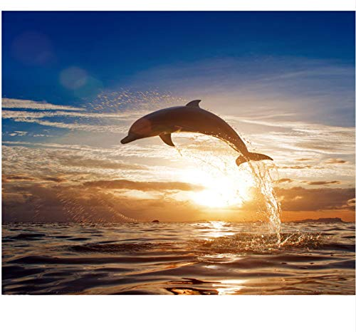 40 Zeitgenössische Leinwand (SDFAF Rahmenlose Delphin Sonnenuntergang DIY Malen Nach Zahlen Seascape Moderne Wandkunst Leinwand Malerei Für Geschenk Wohnkultur 40 cm x 50 cm)