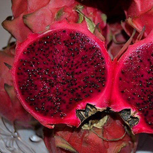 EgBert 50 Pz/Pacco Pitaya Semi Red White Dragon Fruit Tree Seed per Piante Cortile AllAperto Rosso