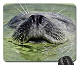 Mauspads - Seal Aquarium Wasser Seal Station Ecomare Texel