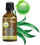 Huile Essentielle Eucalyptus BIO 100% pur/non dilué/thérapeutique qualité/distillée à la vapeur/certifié biologique - 30ml.