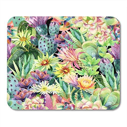 Tanquana prismatica rare rock mesembs exotic succulent cactus fig seed 100 SEEDS Planten, scheuten