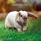 Kanninchen 2018 - Rabbits - Broschürenkalender (30 x 60 geöffnet) - Tierkalender - Wandplaner
