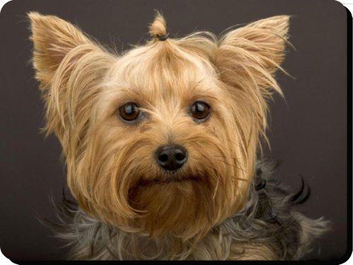 yorkshire-terrier-perro-alfombrilla-de-ratn-padregalo-nico-para-todos-los-amantes-del-perro-266