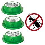 Take Away My Pest ® 3x Maxforce Professional Ant Killer Intérieur/extérieur Station d'appât Piège à Tue Nest