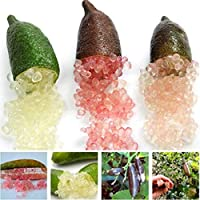 Beautytalk Jardín-Semillas de frutas de caviarlima orgánica Dedos de lima Rareza Semillas de cítricos Semillas de frutas perennes perennes Plantas exóticas Semillas para balcón, jardín